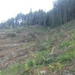 Cippato. Area disboscata prima della pulizia