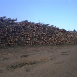 Jerzu Ogliastra Sardegna - cataste di legname uso cippato - lavoro eseguito da Biasi Legno(1)